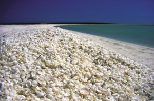 Australien/Westaustralien/Shark-Bay/Shell-Beach
